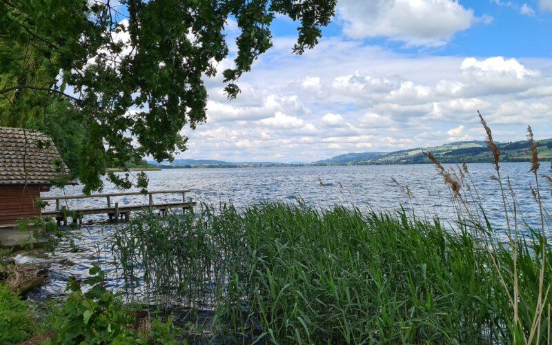 Familienvelotour Sempachersee: Ufer des Sempachersees mit Schilf und Bootshaus mit Anlegestelle