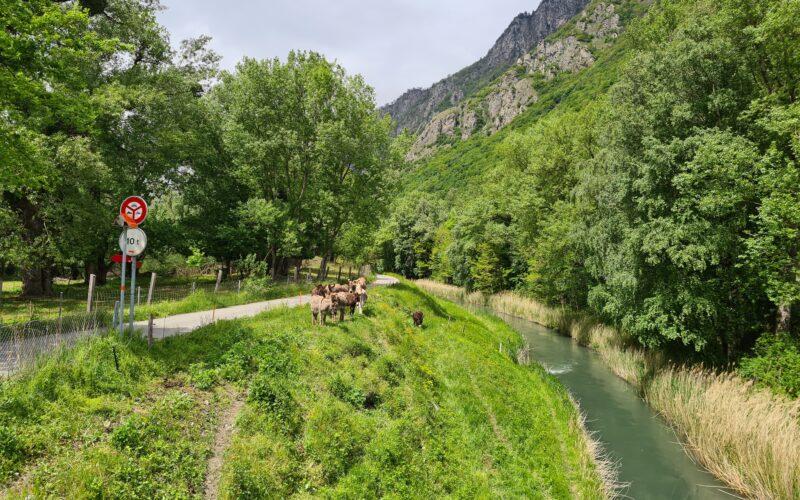 Veloweg entlang eines Seitenkanals der Rhone. Teil der Rhone-Route für Velos.